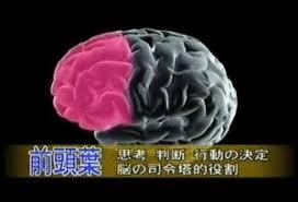「前頭葉」の画像検索結果