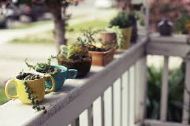 tea and coffee cups as planters