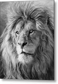 lion portrait black and white. Simple Black Lion Metal Print Featuring The Painting Portrait Of A  Black And White  By Lucie To