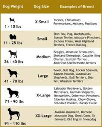 Big Dog Size Chart Choosing The Right Dog Leash For Your Dog Size And Type