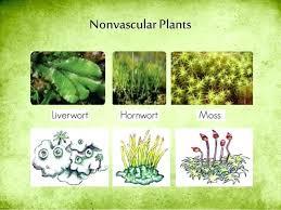 Venn Diagram Of Vascular And Nonvascular Plants Vascular And Non Vascular Plants Chart Laredotennis Co