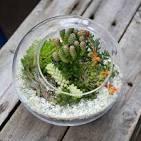 Флорариум своими руками мох