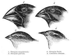 Image result for darwin species