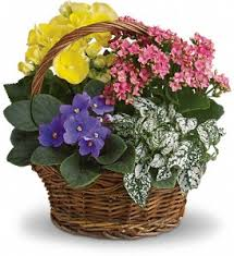 spring has sprung mixed basket in los angeles ca westchester flowers