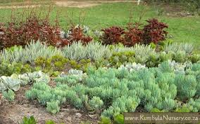 Small Picture Create a successful low cost succulent garden Kumbula