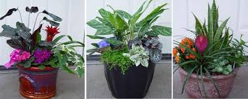 Small Picture Container Design Repotting Bellevue Nursery