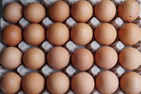 Image result for egg