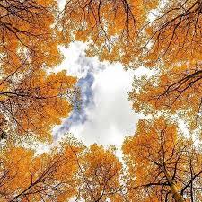 نتیجه تصویری برای پاییز زیبا