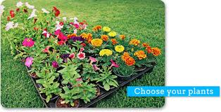 how to plant garden. butterfly garden 2 get involved how to plant