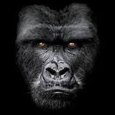 Details About Najestic Gorilla Pick Your Size T Shirt 7 X Large14 X Large