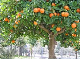 Bearing The Fruit Of Love 1 John 51b  Therefore Now MinistriesTree Bearing Fruit