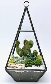cactus succulents terrarium in geometric glass