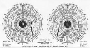 Dr Bernard Jensen Iridology Chart Iridology Chart By Dr Bernard Jensen Amazing Tool Used In
