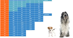 Dog Age Chart By Weight How Old Is Your Dog In People Years