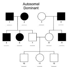 Autosomal Chart Inheritance Patterns Of Orthopaedic Syndromes Basic