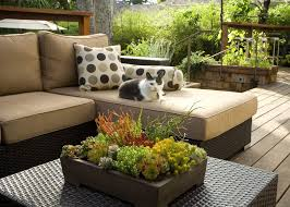 succulents in unusual containers deck contemporary with outdoor cushion reversible outdoor rugs