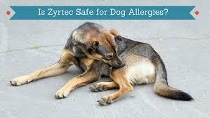 Cetirizine Dog Dosage Chart Is Zyrtec Safe For Dogs Smart Dog Owners