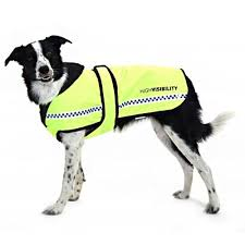 equisafety polite waterproof padded dog rug