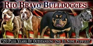 Puppies For Sale Sign Future Bulldog Bulldogge Breedings Rio Bravo Bulldogges