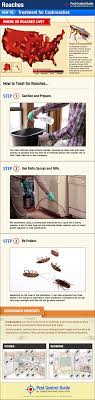 roach treatment infographic