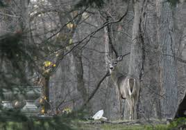 Ohio Michigan Deer Hunting Seasons Switch From Archery To