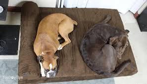 big barker dog beds. Exellent Barker Big Barker Dog Beds Review  Best Bed For Dogs Inside Z