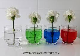 Experimento Con Plantas Agua Y Colorante Alimentario La