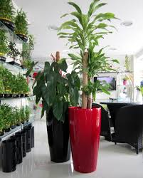 office plants for sale. Delighful Plants Office Plant Pots Indoor Plants And Planters Dubai  Containers Inside For Sale O