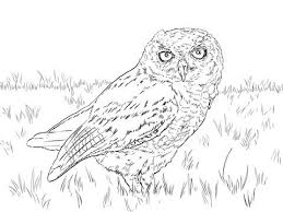 Small Picture 37 best Owls images on Pinterest Drawings Drawing and Owl drawings