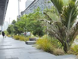Small Picture Rain Garden Mix Auckland