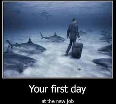 eriec start your new job these 1st day sharks