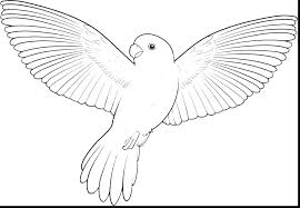 Bird Coloring Pages Screech Owl Bird Coloring Page Free Bird