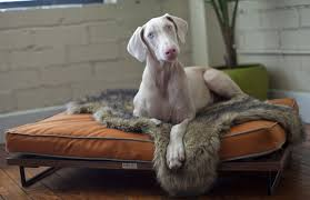 big dog furniture. Architect Pets Makes Modernist Doggy Daybeds And Scratching Posts For Design-Loving | Inhabitat - Green Design, Innovation, Architecture, Big Dog Furniture P