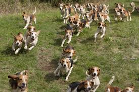 lots of dogs together. Perfect Lots World Animal Reiki Day Join The Movement For Lots Of Dogs Together