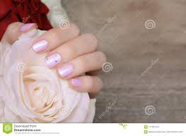White Rose Nail Design Female Hands With Pink Nail Design Holding White Rose Stock