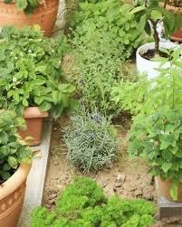 herb garden design diffe types of