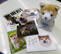 akita prefecture also sent zagitova various gifts like an akita dog stuffed folder and tourist information