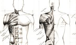 More specifically, this beautifully illustrated anatomy chart includes head and neck, thorax, multiple abdominal view, and frontal views of each muscular extremity of the human body. Anatomy And Drawing Anatomy Drawing Diagram