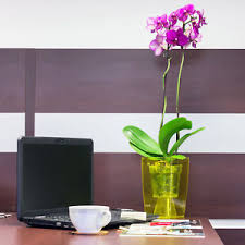 office flower pots. Image Is Loading Modern-Orchid-Pot-Assorted-Shape-amp-Colour-Small- Office Flower Pots R