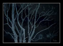 landscape painting trees at night