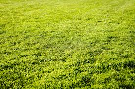 grass field texture. Download Green Grass Field Background, Texture, Pattern Stock Photo - Image Of Agriculture, Texture G