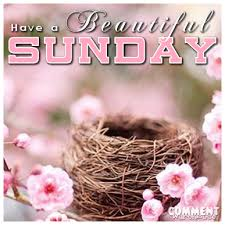 Beautiful Sunday Quotes Images Best of Have A Beautiful Sunday Bird Nest Comments Images Pics Quotes