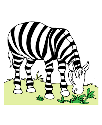Small Picture Wild Zebra Coloring Pages for Kids to Color and Print