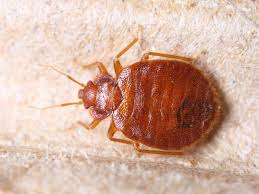Do Bed Bugs Hibernate Terminix
