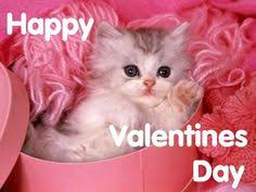 cute animal valentines day wallpaper. Fine Valentines Wallpaper And Background Photos Of Baby Kittens For Fans Baby Animals  Images For Cute Animal Valentines Day 4