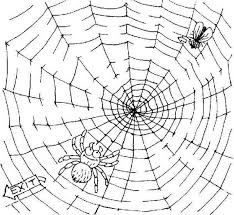 Small Picture Fly Trapped on Spider Web Coloring Page Fly Trapped on Spider Web