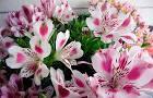 Цветок с фотографией