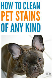 how to clean pet stains get the spot