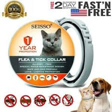Dewel Pro Guard Flea Tick Control Collar Anti-insect Mosquitoe for Small  Cat USA | eBay