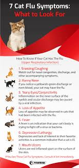 cat flu symptoms what to look for